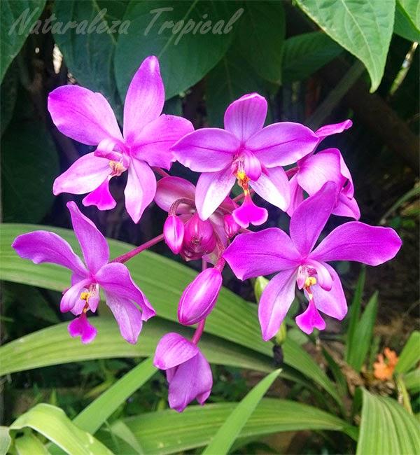 Grupo de orquídeas terrestres, familia Orchidaceae