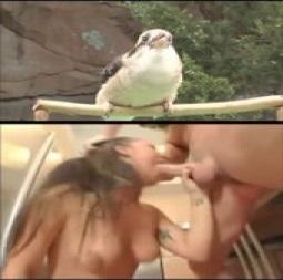 Os passarinhos e as mamadas...