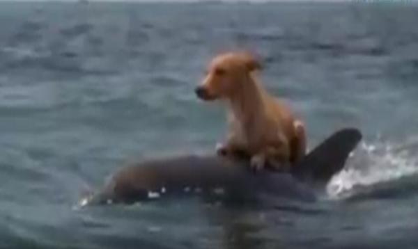 ikan lumba-lumba menolong anjing dari tenggelam di lautan