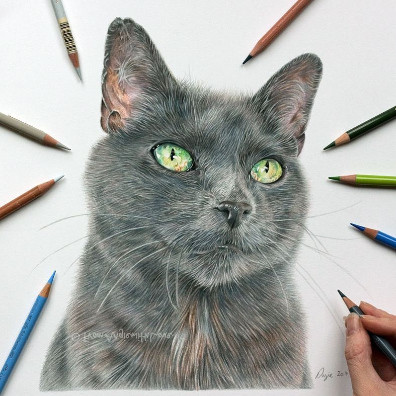01-Sage-rescue-cat-Angie-A-Pet-and-Wildlife-Pencil-Drawing-Artist-www-designstack-co