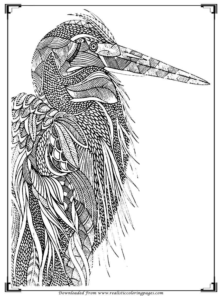 Printable birds coloring pages for adults realistic for Bird coloring pages to print