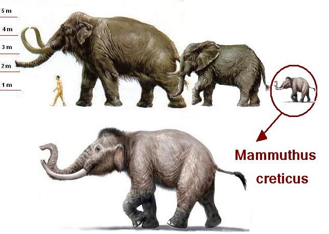 Картинки по запросу Карликовый мамонт, карликовые мамонты