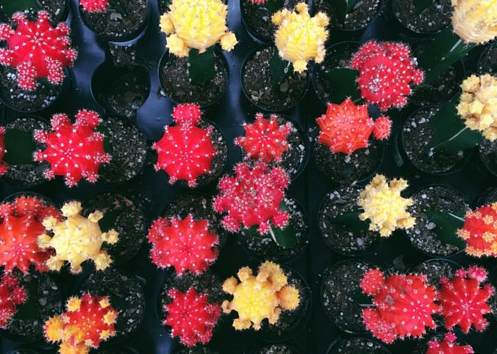 Cacti // WWW.THEJOYBLOG.NET