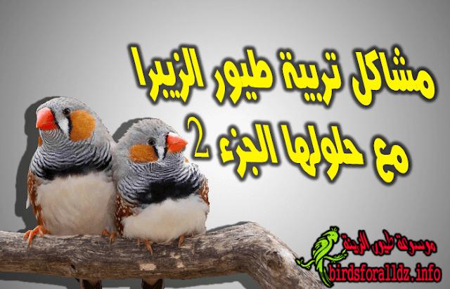 مشاكل تربية طيور الزيبرا