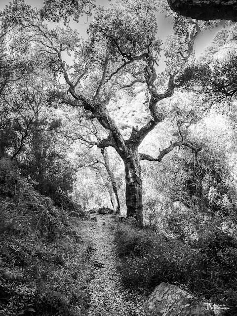 El árbol - Javi Matoses
