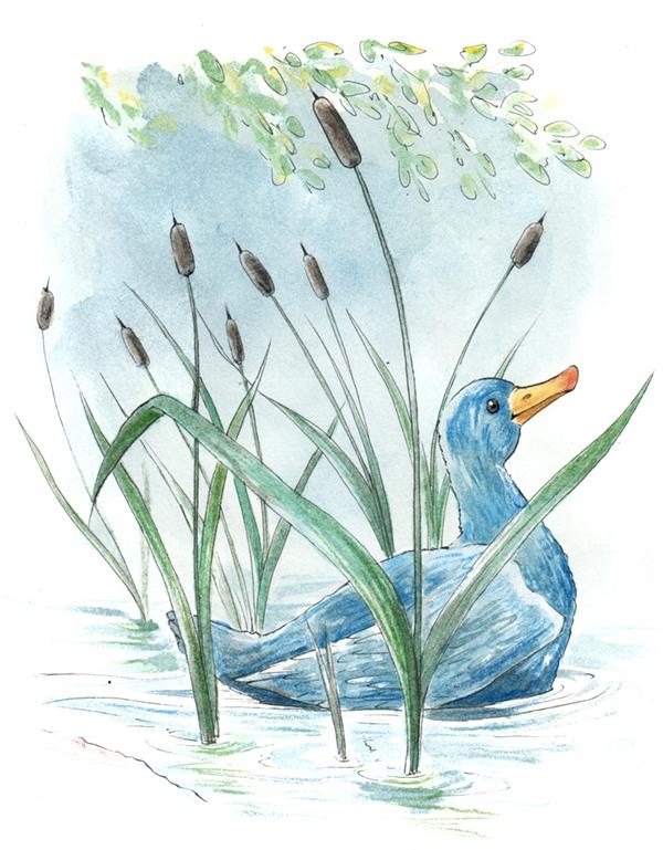 aquarelle canard bleu