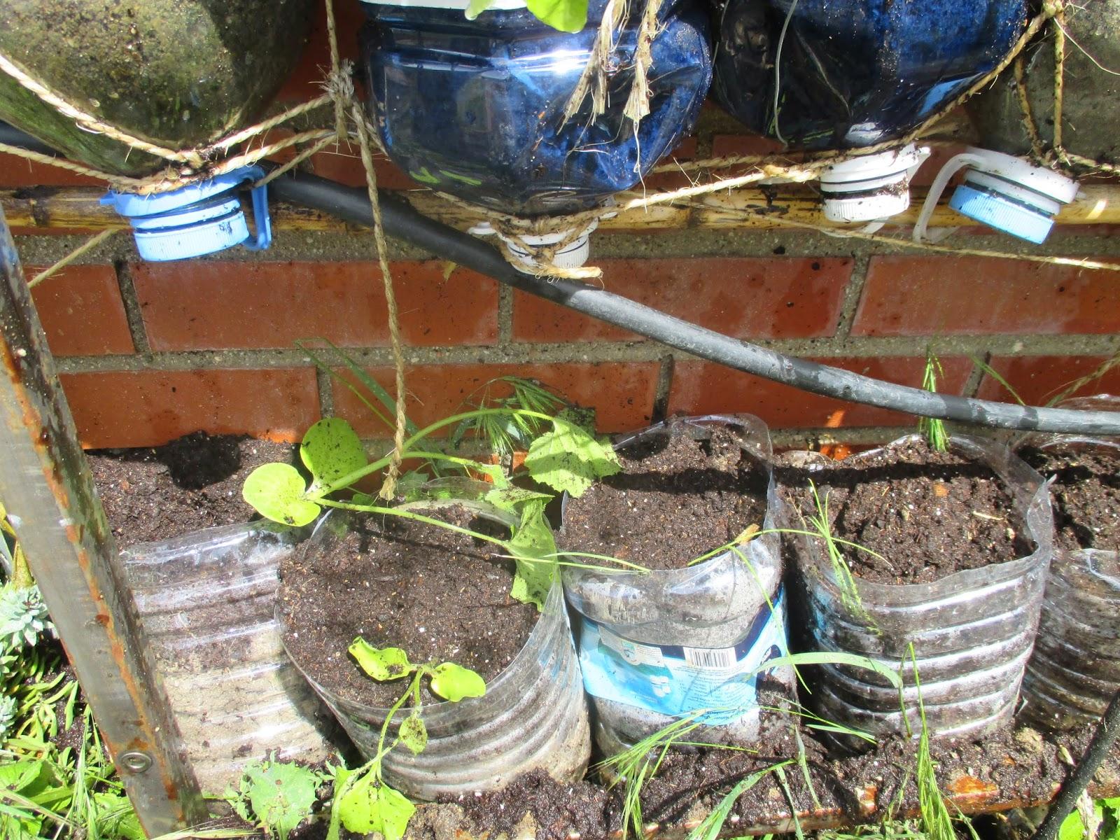 En torno al huerto plantas en el huerto vertical for Como se realiza un huerto vertical