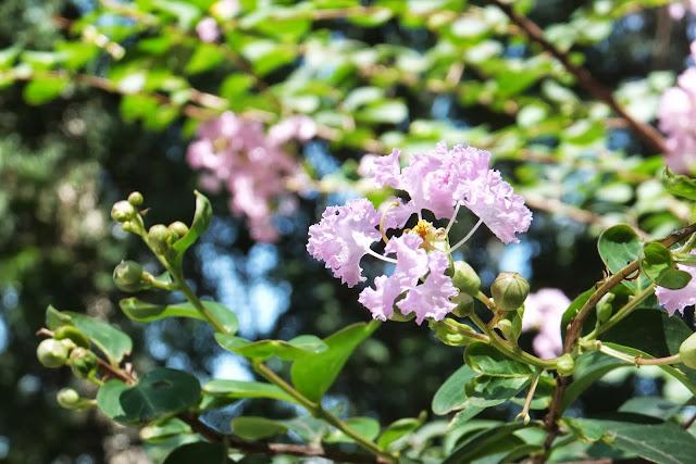hanoi-zoo-flower ハノイ動物園の花