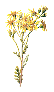 stock wildflower image