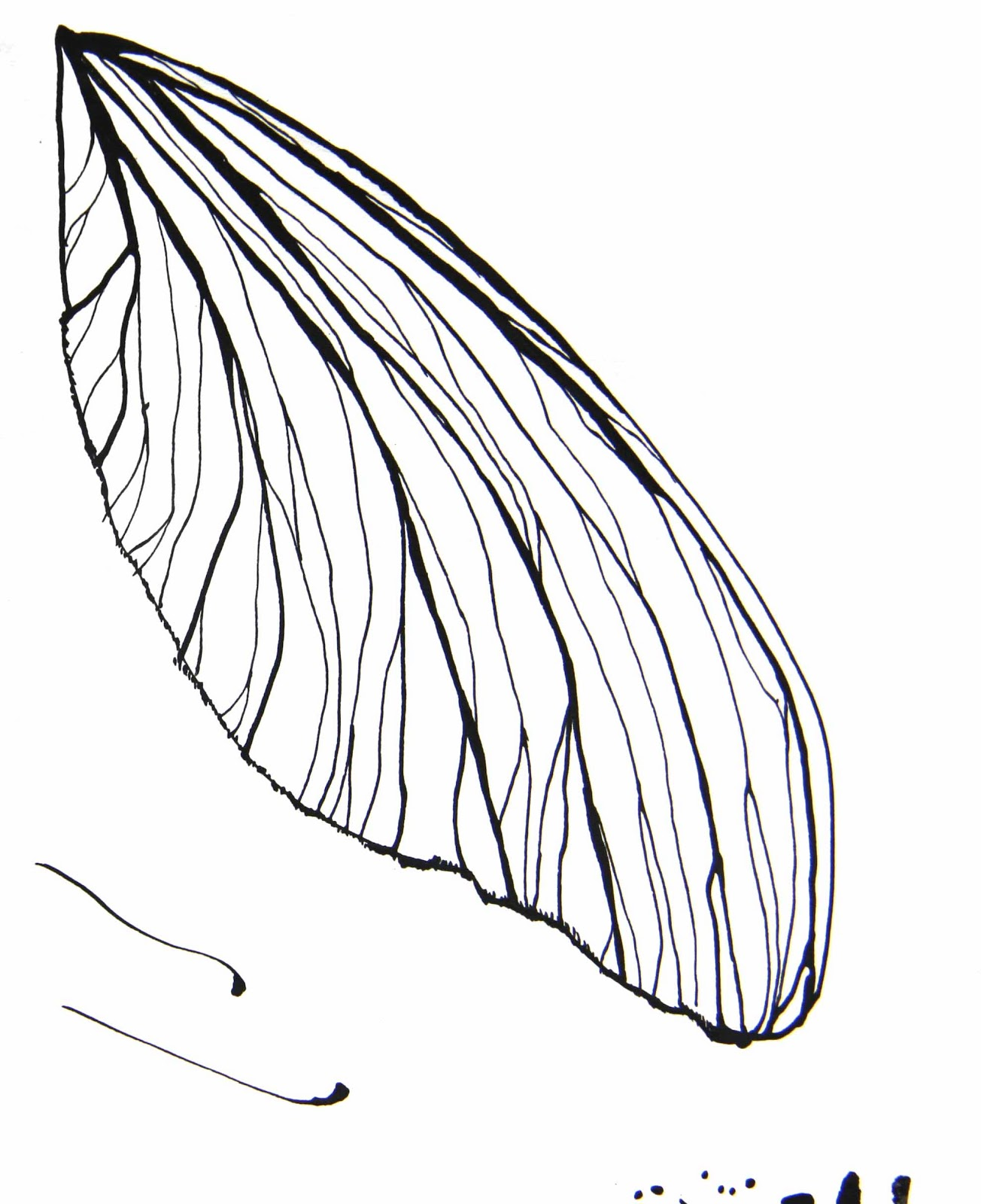 Butterfly Wings Drawing | www.imgkid.com - The Image Kid ...