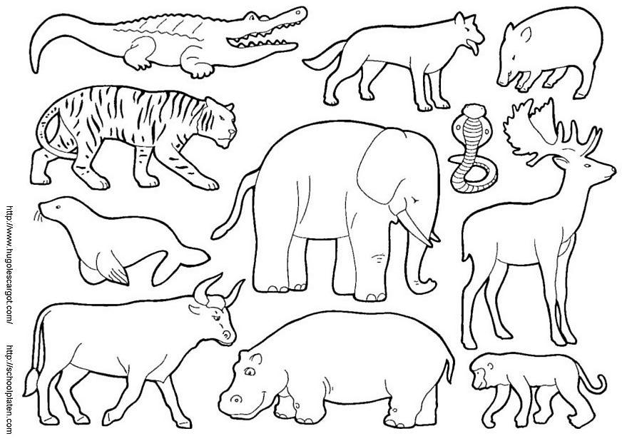 El Reino Animal Para Colorear Imagui