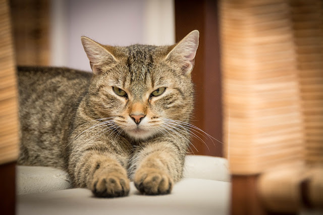 Jika Kamu Didekati Kucing, Berarti Ada 3 Pertanda Ini Dari Allah SWT