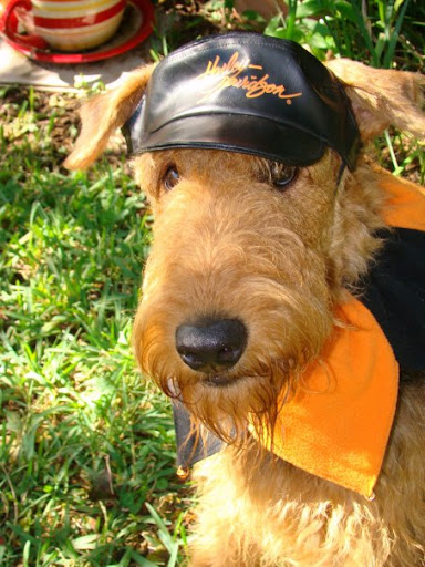 Bailey Airedale, Livin', Lovin' & Laughin'