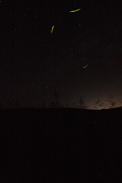 some fireflies above the tall grasses while looking north-east