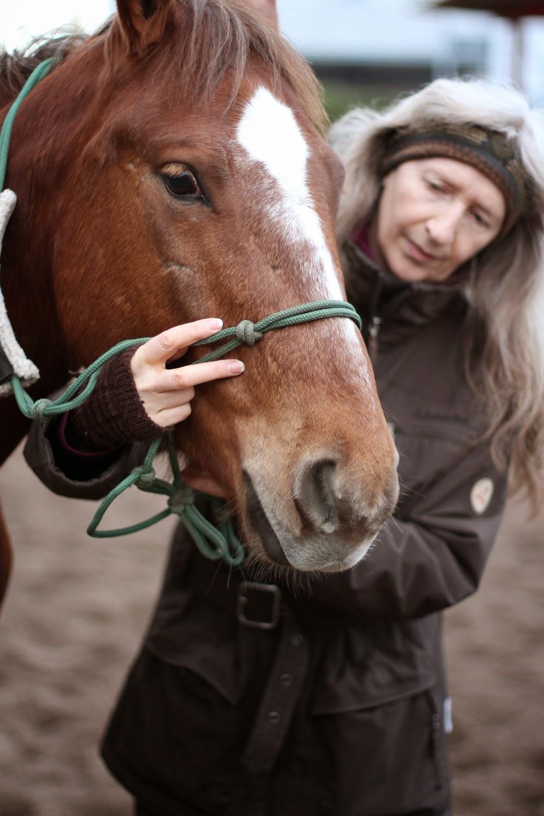 Pferde Blog: Wie sitzt das Knotenhalfter richtig? Wie wird