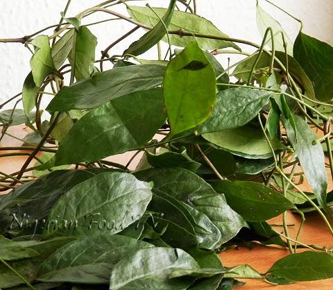 Ukazi leaves Afang Leaves  Gnetum Africanum Okazi leaves, Difference Between Okazi(Ukazi),Utazi, and Uziza leaves