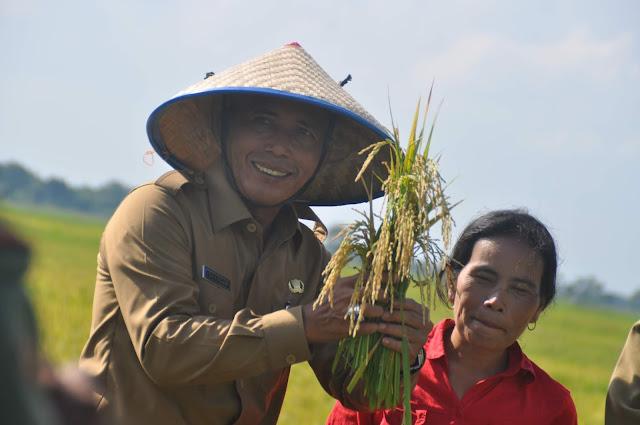 Data Lahan Pertanian Menurun, Bupati OKI; Kita Fokus Capai Swasembada Pangan