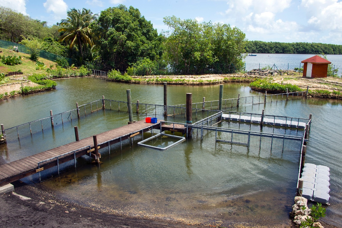 A picture taken on 10 August 2016 shows the accommodation centre of Blachon for manatees in Grand Cul-de-Sac Marin in Guadeloupe.