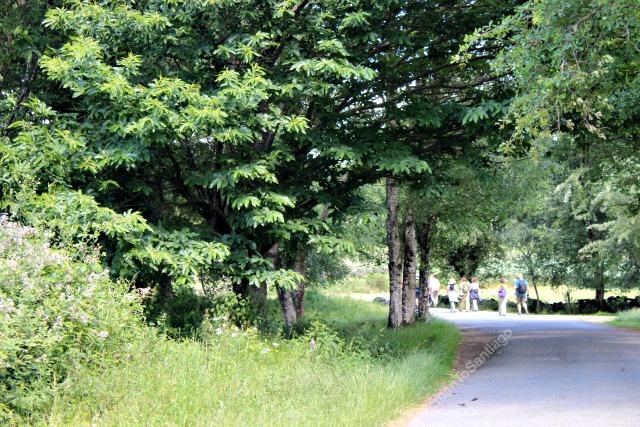 camino-frances-bosques-taller-del-camino-de-santiago-womantosantiago