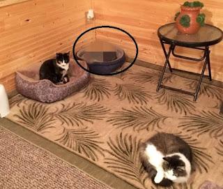 Avó achava que tinha 3 gatos, mas neto descobre que 1 deles não era o que parecia