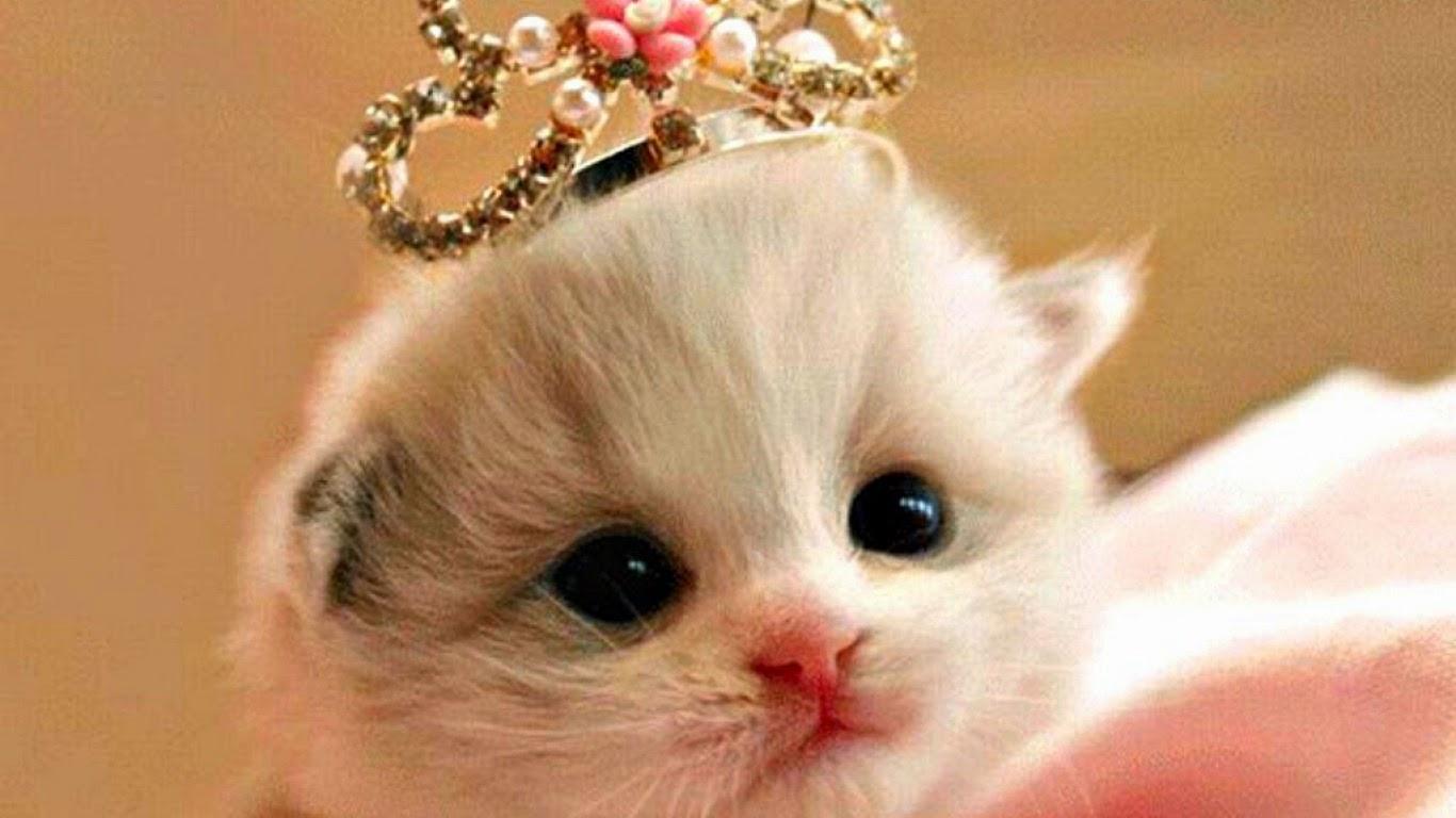 Foto Anak Kucing Yang Lucu Terlengkap Display Picture Update
