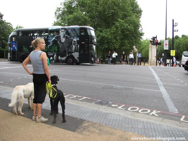 Один день в Лондоне - даблдекер и британка с двумя собаками