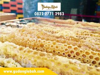 distributor madu asli,grosir madu karet,jual madu karet,madu asli,madu karet,madu karet asli,madu karet curah,madu kembang karet,supplier madu karet