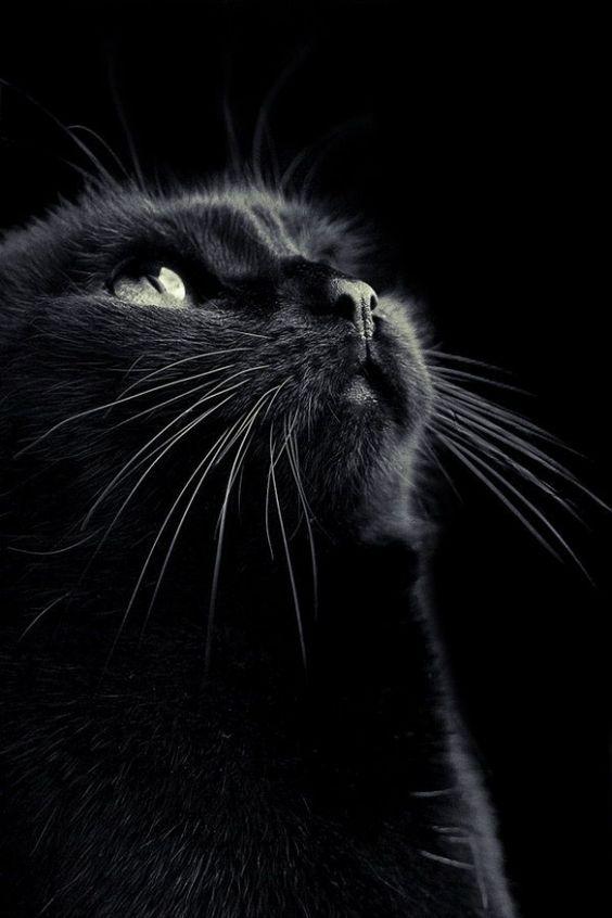 The Umbstaetters' cat 'zine