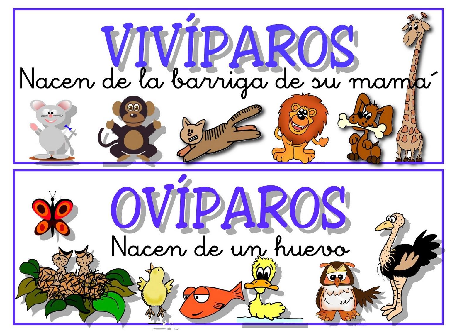 Imagenes De Animales Oviparos