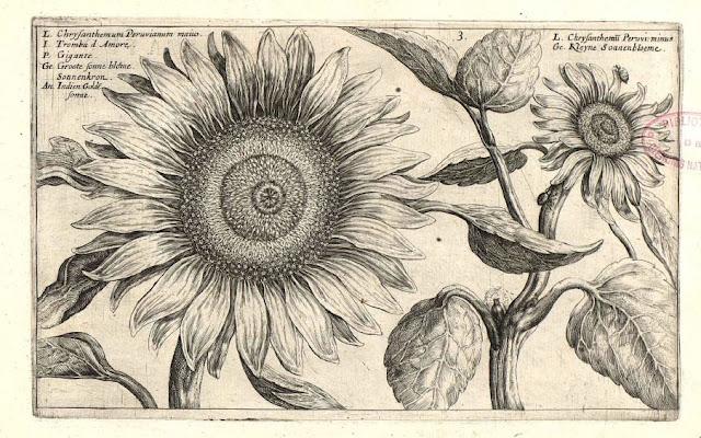 Flos blume flower fleur flor betok fiore for Biblioteca digital real jardin botanico