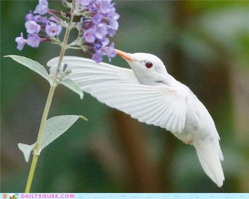 pictures  jokes  and other stuff  albino hummingbird