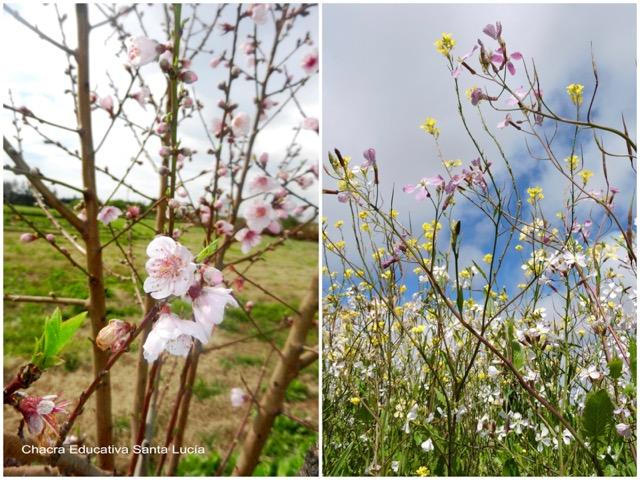 Frutales en flor / Flores en los canteros de la huerta - Chacra Educativa Santa Lucía