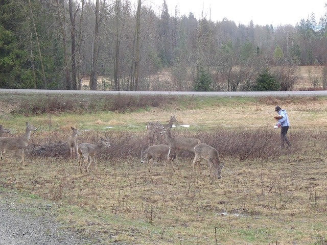 Jane Feeding The Wild Deer