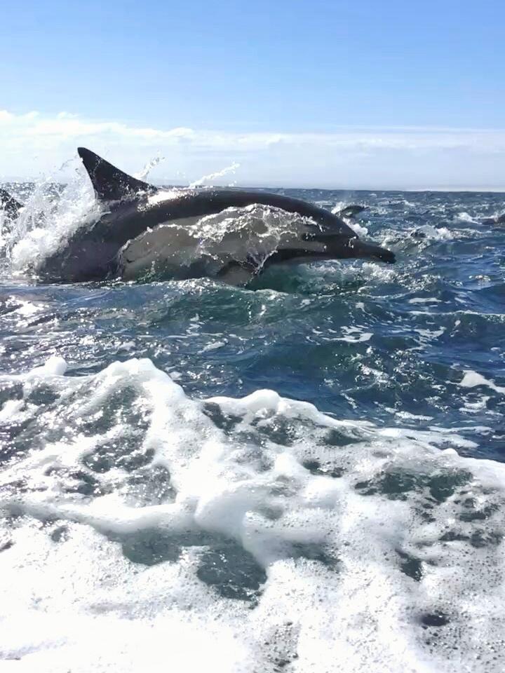 Přívod vody na velryby připojte