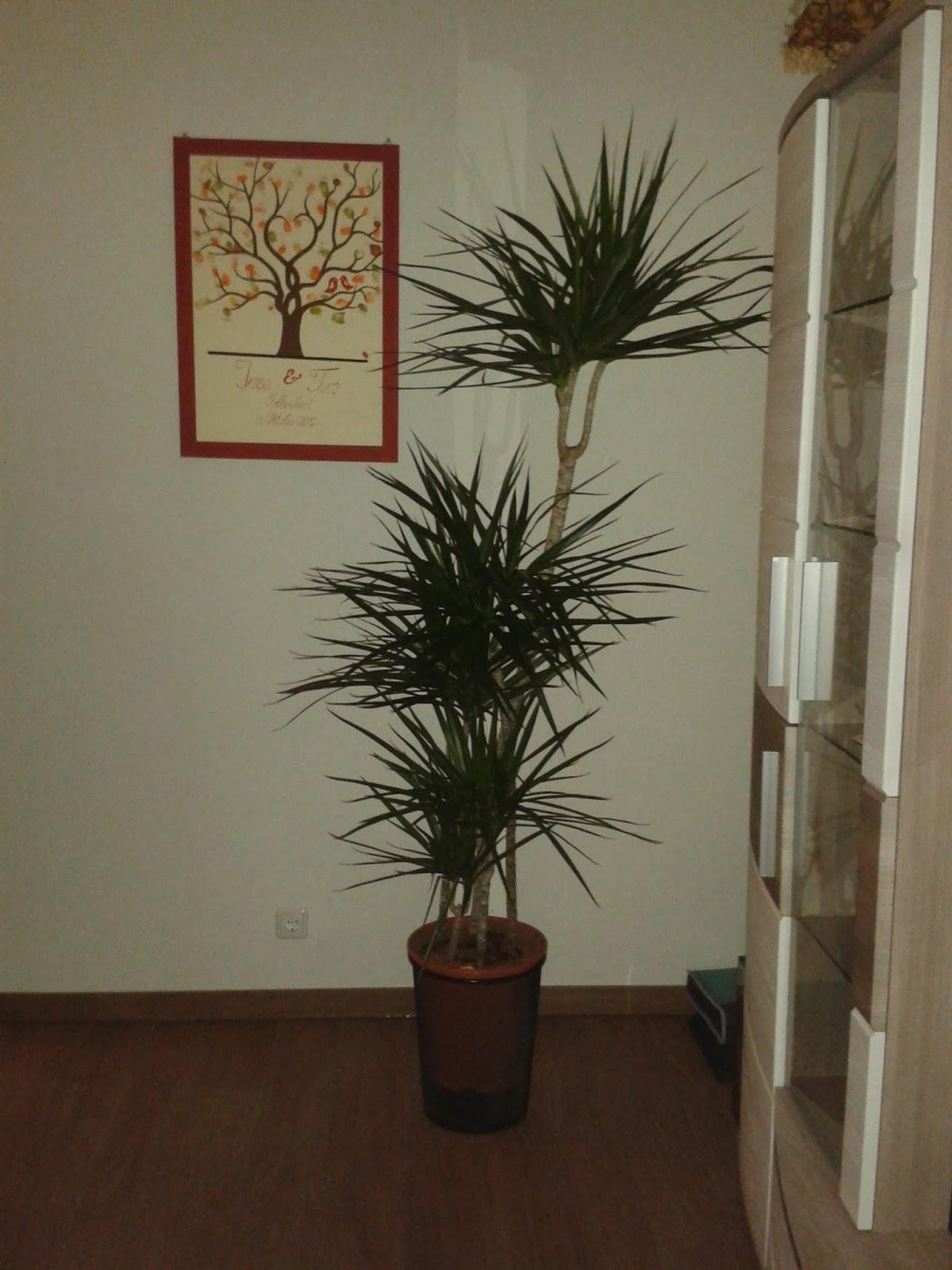 Wohnzimmer palme - Stylische balkonmobel ...