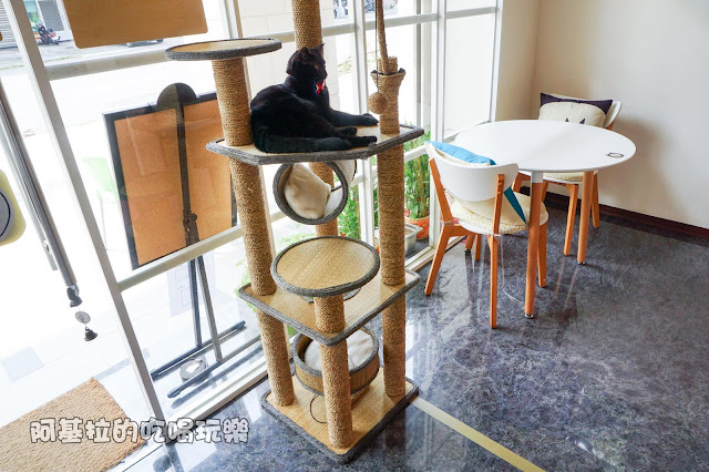14543949 1099288070124437 6165286881746292515 o - 熱血採訪|朵貓貓咖啡館 - 貓咪餐廳