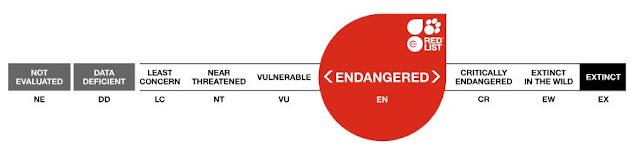 Label status perlindungan elang jawa pada level endangered (iucnredlist.org)
