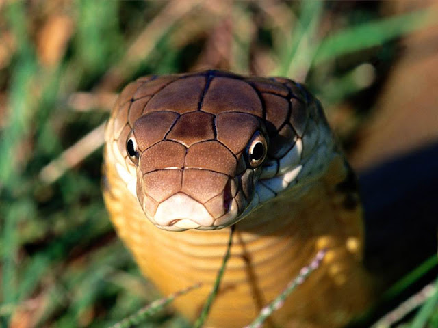 Deadly Beauty-Snake16