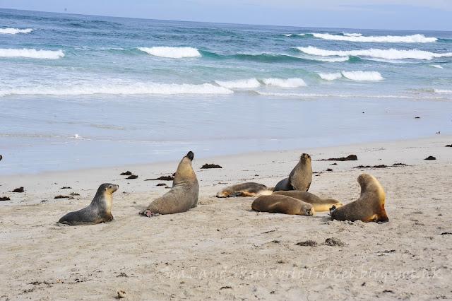 袋鼠島, 海豹灣保育公園, Seal Bay Conservation Park