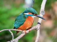 https://www.loqueveoenzaragoza.com/p/aves_27.html