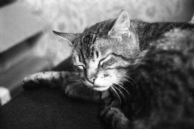 Оцифровка фотопленок в Калининграде: Пример оцифровки черно-белого кадра с советской фотопленки 35мм Свема 64