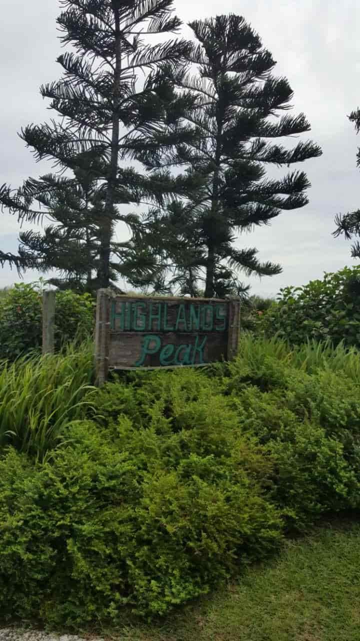Pine trees at Tagaytay Highlands