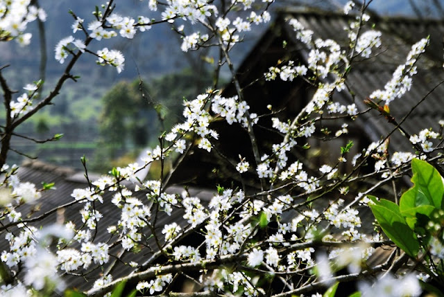 The Unique Flowers of North Vietnam Spring 3