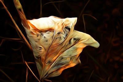Herbst, autumn, autunno, осень, otoño, automne, mùa thu, 秋, Hösten, восень, vjeshtë, payız, Udazkeneko, jesen, есен, efteråret, sügis, syksy, φθινόπωρο,