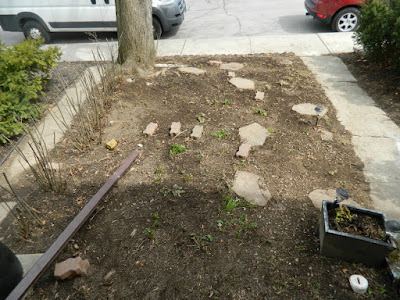 Davisville Mount Pleasant East Spring Front Garden Cleanup After by Paul Jung Gardening Services a Toronto Gardening Company