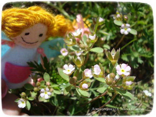 zagadki-pro-vesennie-cvety-podsnezhniki-prolomnik