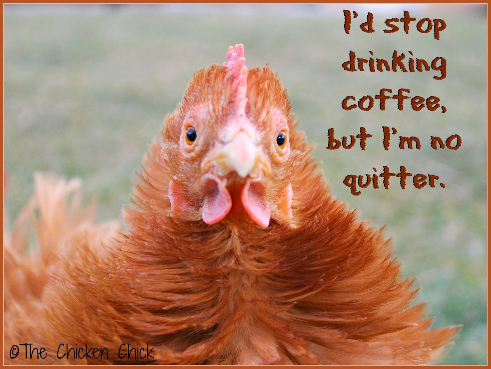 I'd stop drinking coffee, but I'm no quitter.