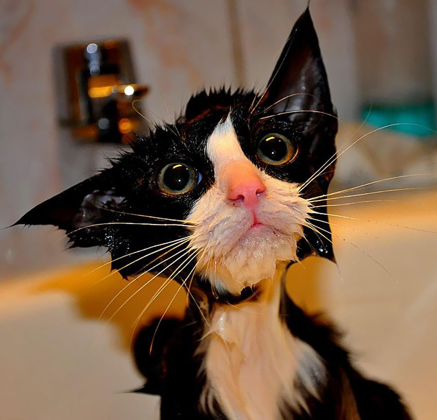 funny-wet-cats-21
