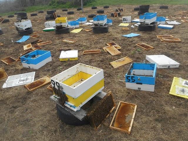 ΣΟΚ: Εγκληματική ενέργεια σε βάρος μελισσοκόμων: Κλέφτες ρίμαξαν ολόκληρο το μελισσοκομείο και άφησαν συντρίμμια πίσω τους