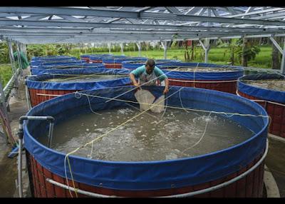 Sistem Bioflok Budidaya Ikan lele